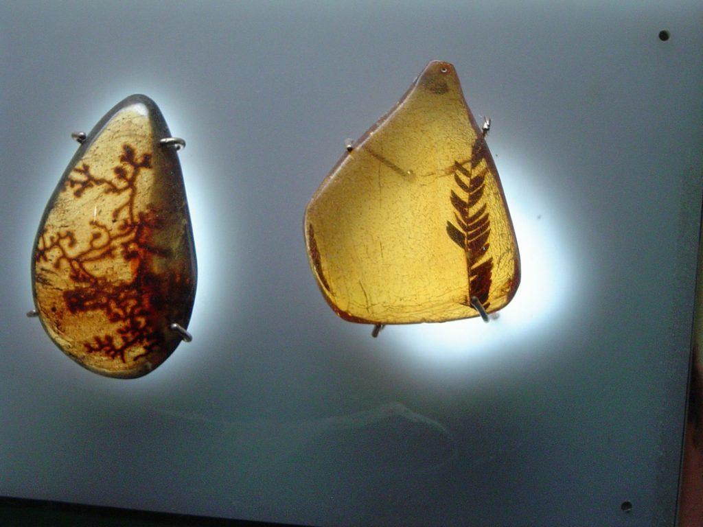 amber museum in punta cana dominican republic