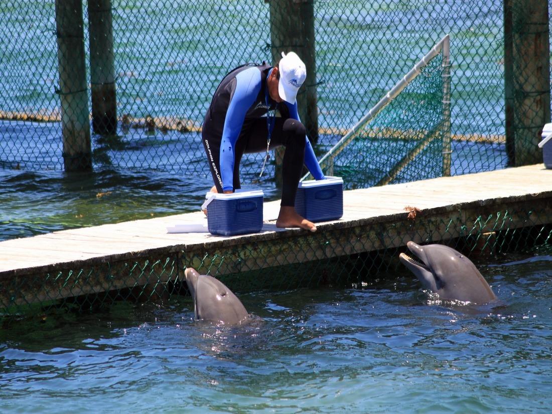 where is dolphin explore punta cana
