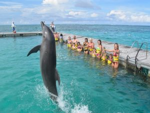 the best dolphin islan is the carribean punta cana dominican republic