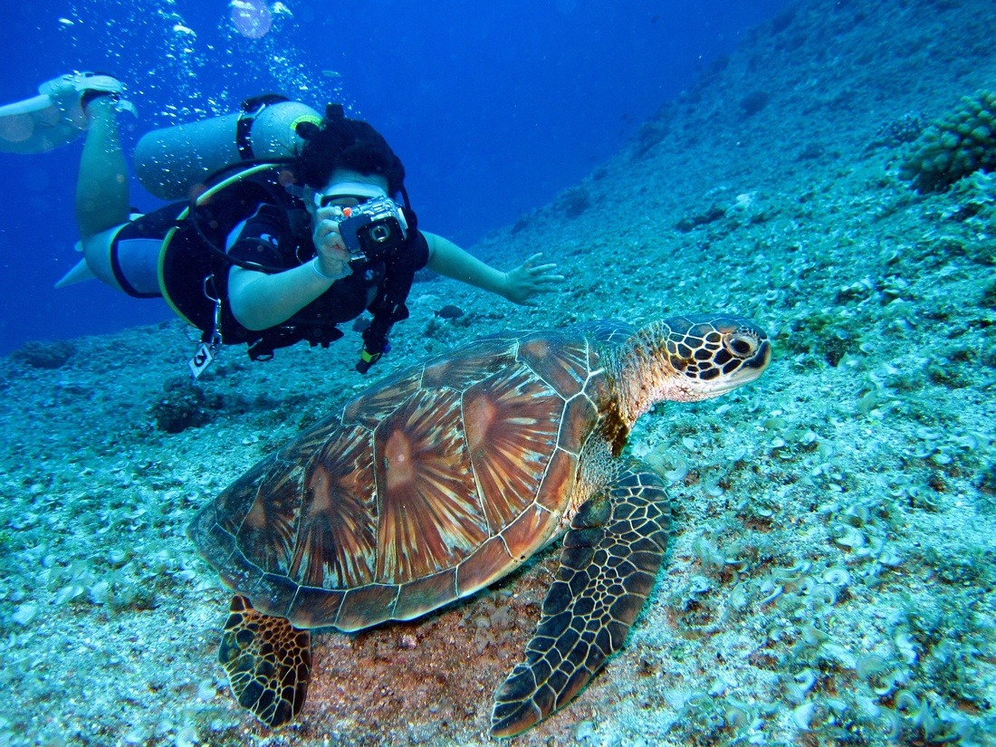 best activities and attractions in punta cana